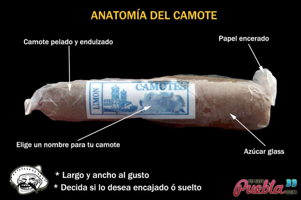 anatomiacamote