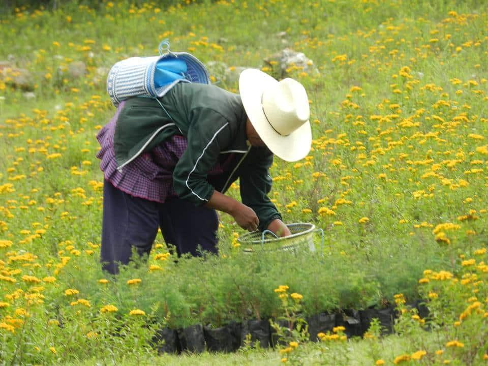 reforestacionagriculturatehuacancuicatlan