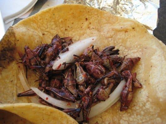tacos-chapulines-puebla