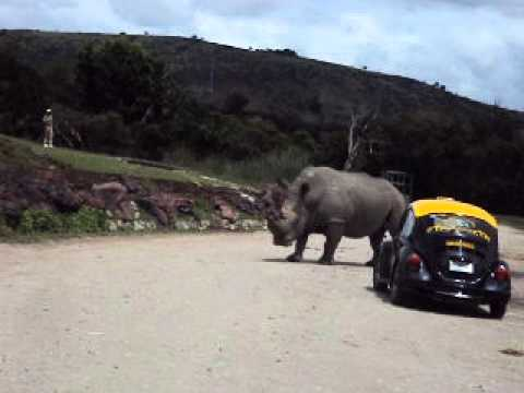 africam-safari-puebla-antiguo