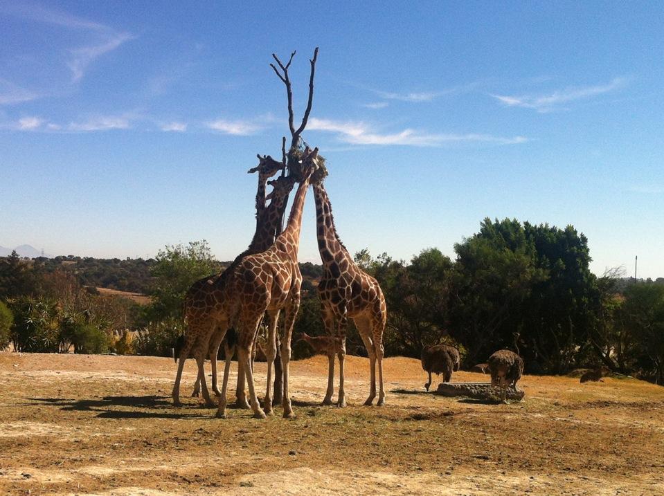 africam-safari-puebla