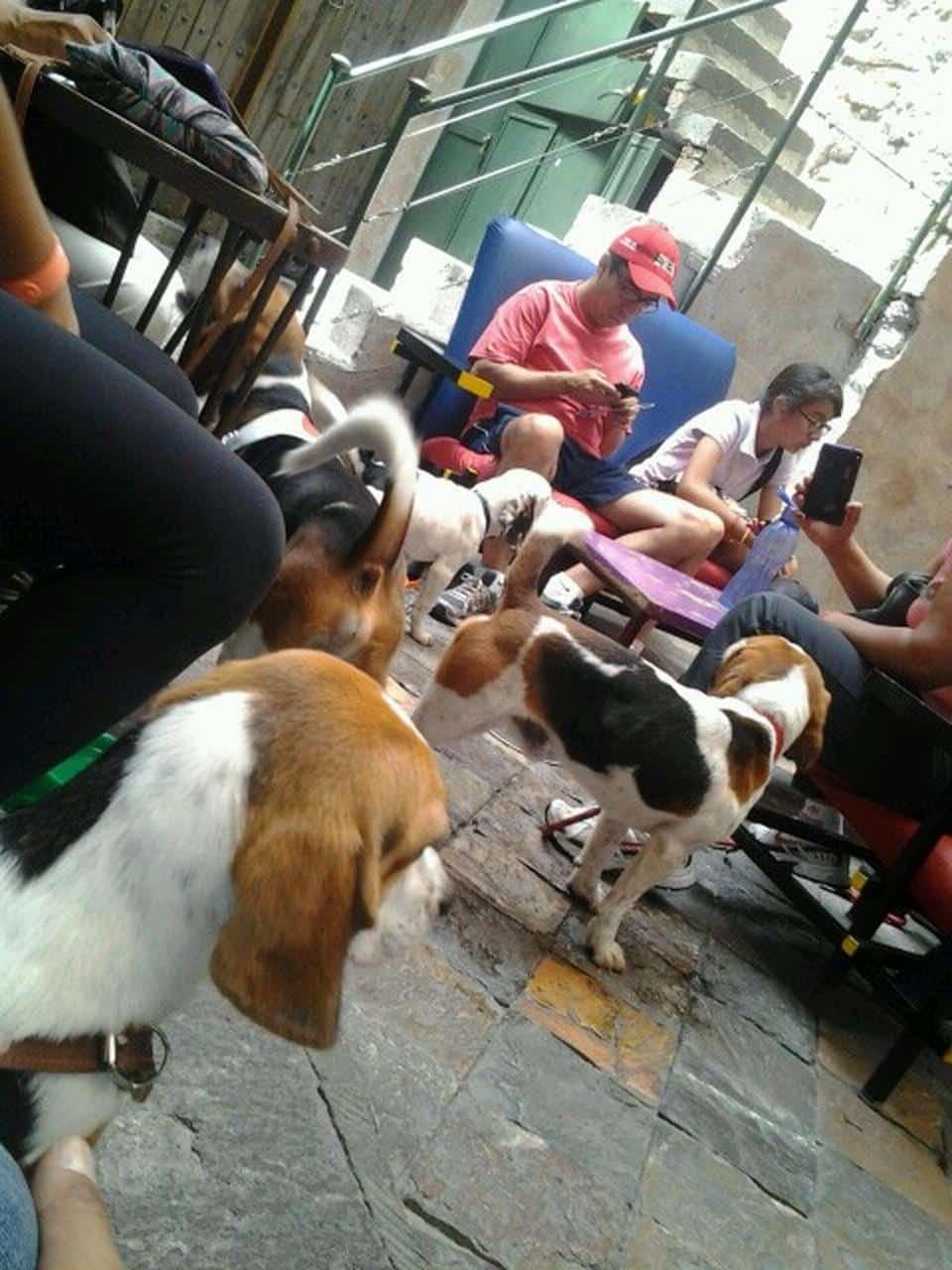 all-day-puebla-pet-friendly