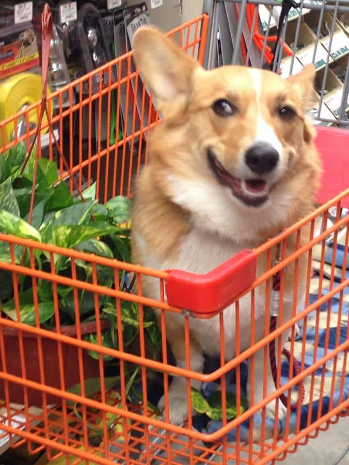home-depot-pet-friendly