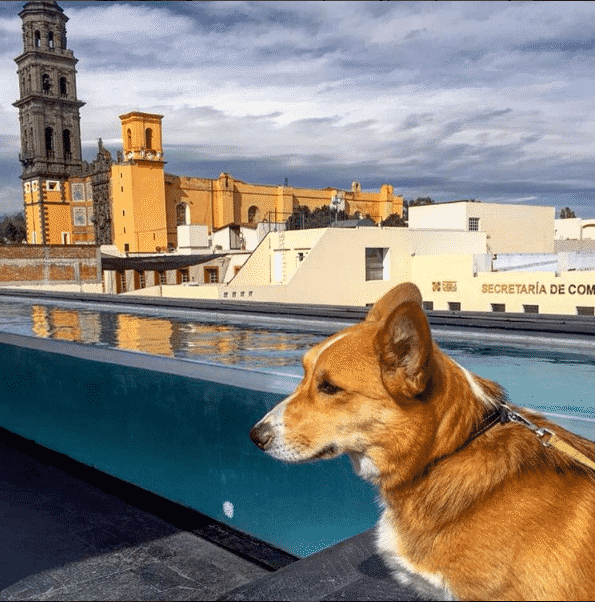 la-purificadora-pet-friendly-puebla
