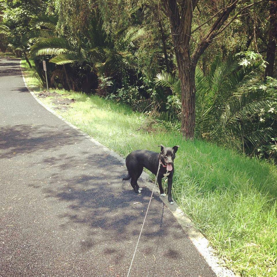 paseo-atoyac-puebla-pet-friendly