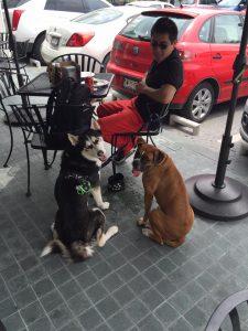 plaza-mazaryk-puebla-pet-friendly