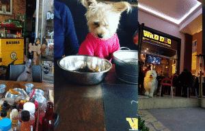wild-dog-puebla-pet-friendly-resttaurant